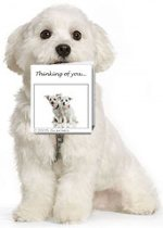 Maltese Dog holding a Greeting Card