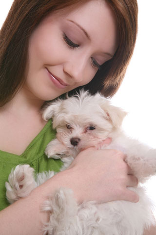 Puppies on Find Maltese Puppies At Your Local Animal Shelter