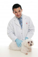 Maltese with vet