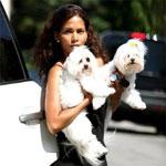 Maltese Celebrity Dog Names