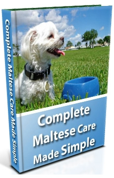 Complete Maltese Care Made Simple eBook