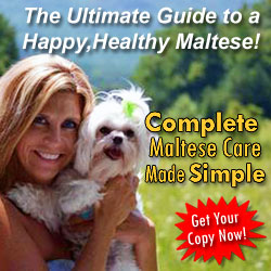 The Ultimate Guide to a Happy, Healthy Maltese Dog!