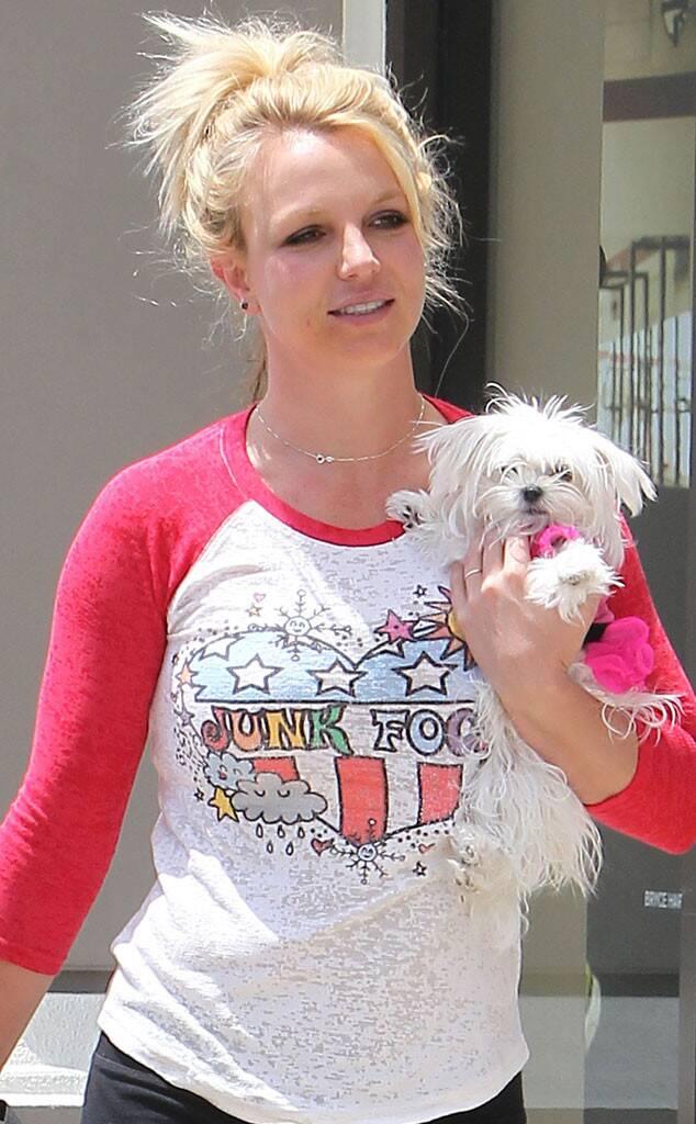 Britney Spears Maltese dog