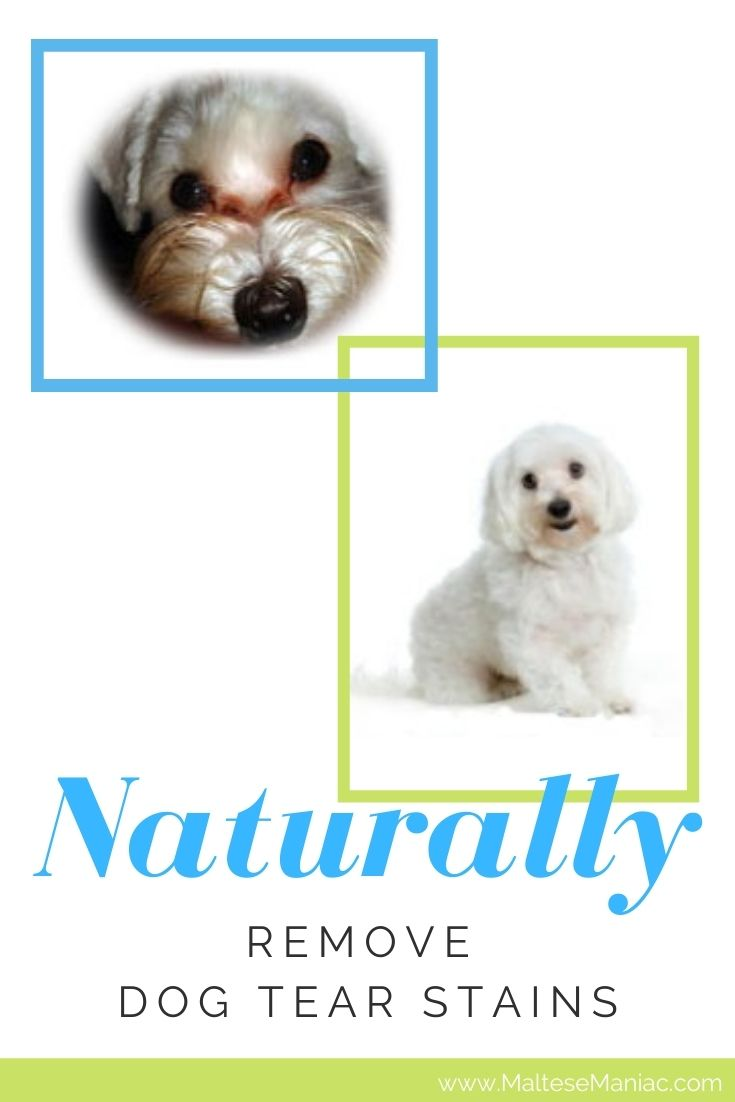 Naturally remove dog tear stains