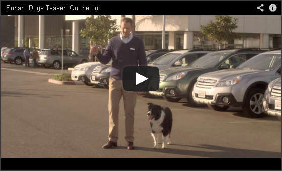 Subaru Dog Tested Video