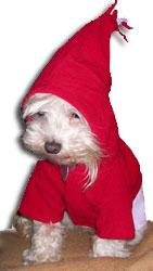 Marley in a hoodie