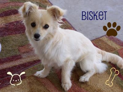 I love bisket!
