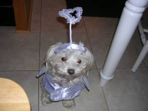 Marley in her angel costume