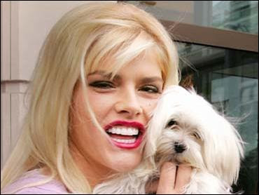 Anna Nicole Smith's Maltese dog