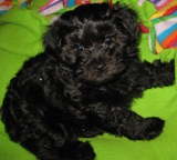 Lily at 8 weeks