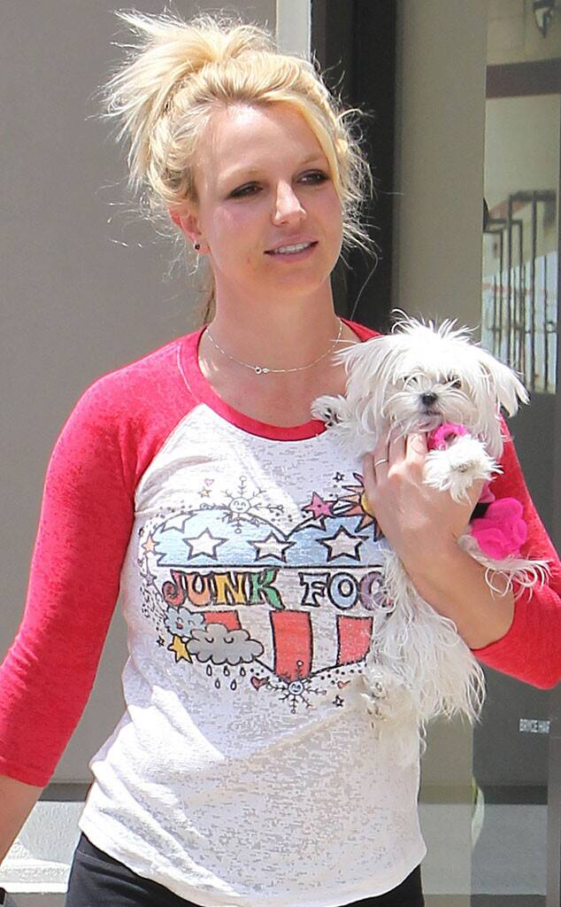 Britney Spears Maltese dog