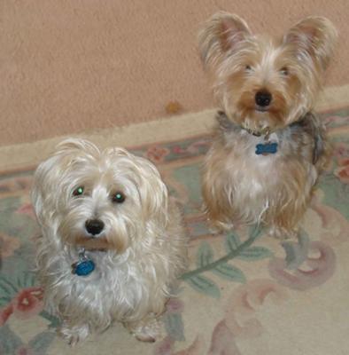 Katie and best friend, Max