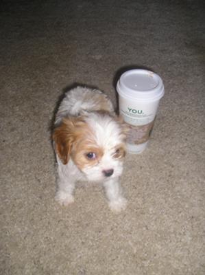 Tiny pup