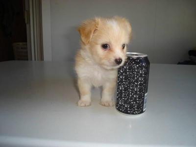 Cutie Pepper!