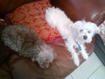 Ebony & Ivory :]  (Mitzi and Sir Wrigley)
