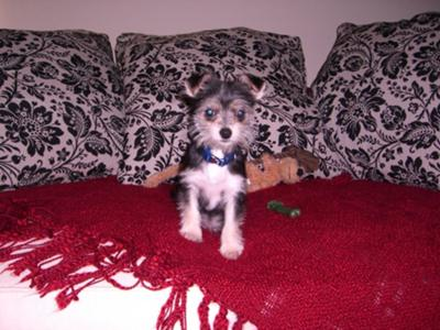 Mr. Bill as a puppy