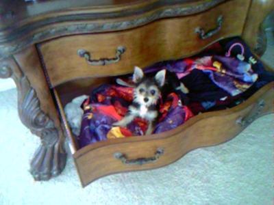 In the babysitter's drawer