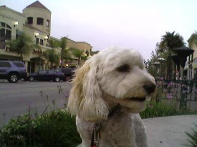Riley Downtown Huntington Beach