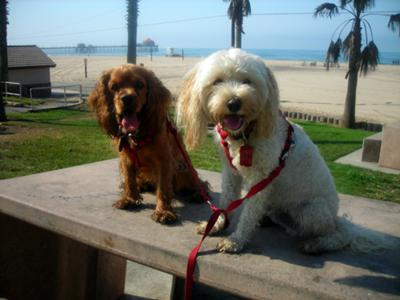 Princes and Riley after Beach Walk