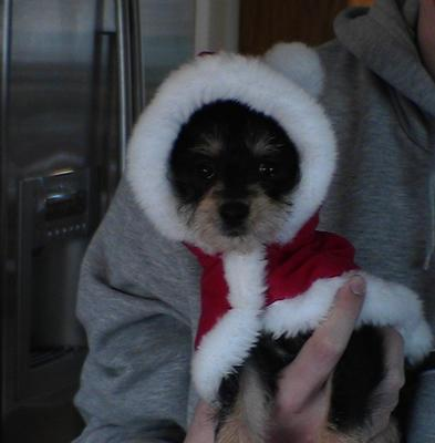 Cole in a Santa suit! How cute?