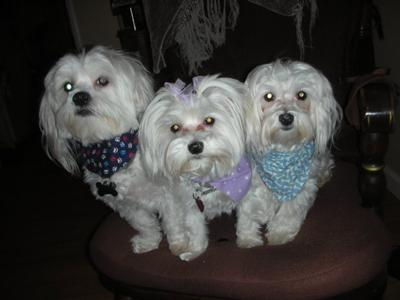 Jake, Abby and Chowder