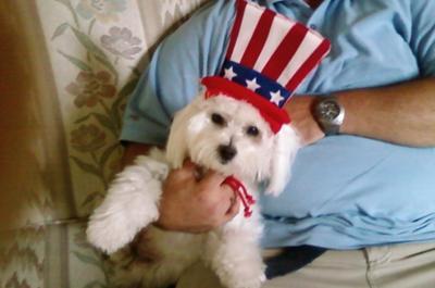 All American Dog
