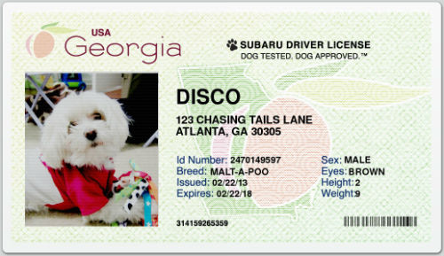 Dog drivers license