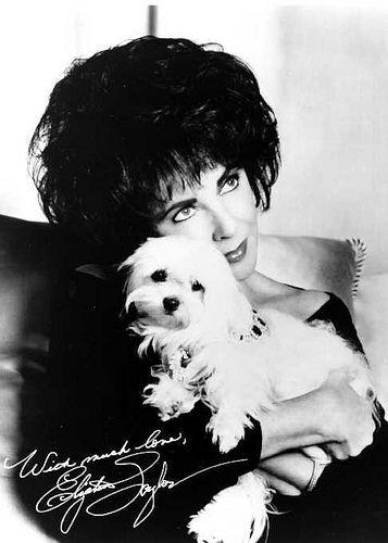 Elizabeth Taylor's Maltese dog
