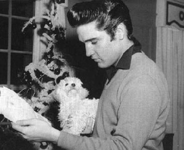Elvis Presley Maltese dog