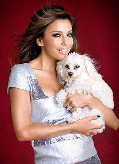 Eva Longoria's Maltese dog