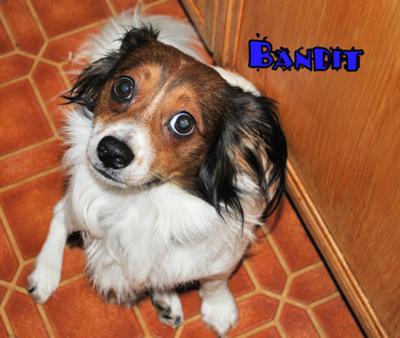 Bandit Boy