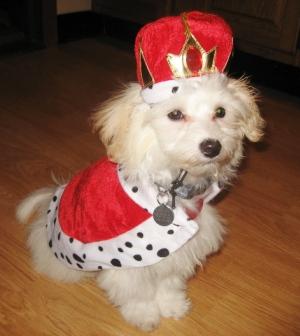 King Small Dog Costume Benny