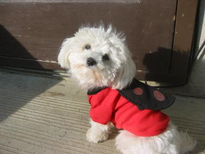 LuLu Belle, the cutest little lady bug.