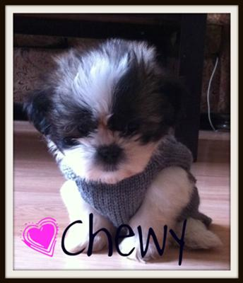 Meet my new addition...Chewy