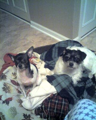 Rigley and Poncho. Rigley is the bigger one.