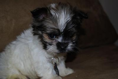 Gizmo at 8 weeks
