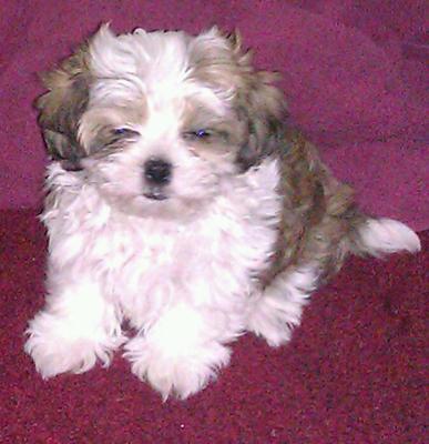 my baby boy Twix
