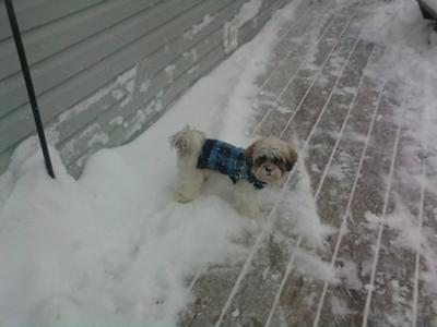 Milo in our 2010 Blizzard