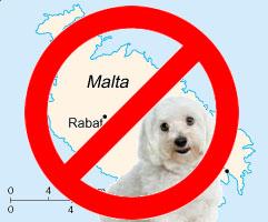 Maltese dogs not from Malta Island