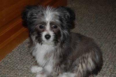 Here's Cooper!