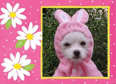Daisy Bunny.