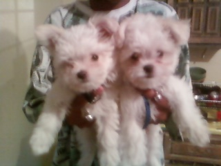 Chewy is on the left Gizmo is on the right