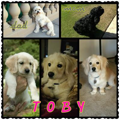 Toby's Parents, him as a puppy and 2 latest pictures