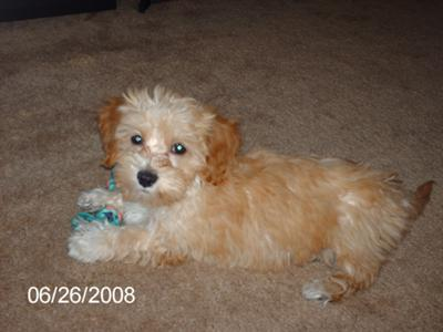 Bella as a puppy