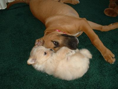 Sweet Pea and Remi