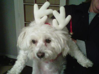Reindeer Molly