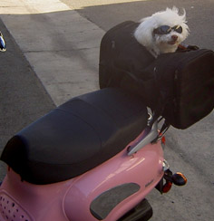 Moki Harley Rider in Training