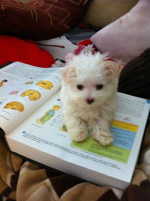 Helping momma study :)