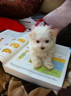 Helping momma study :)