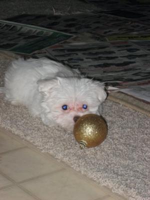 Stealing Christmas Balls